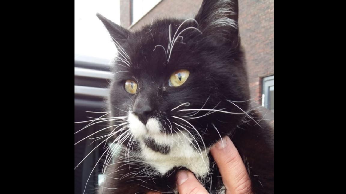 De kat lifte vanuit Oostenrijk mee naar Aalsmeer.
