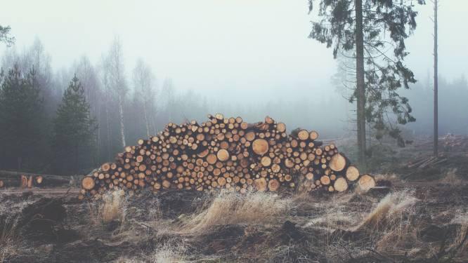 Bosgroep Kempen Noord verkoopt brandhout online