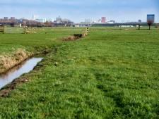 Milieufederatie wil méér windmolens in Rijnenburg en Reijerscop
