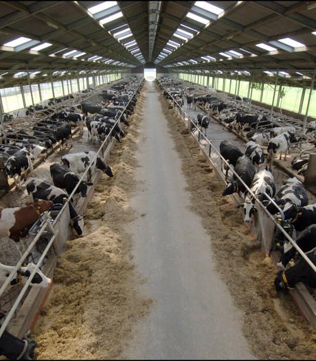 'Miljoenen dieren in veehouderij sterven te vroeg'