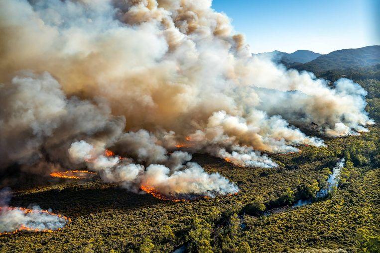 Op Tasmanië ontstonden door de droogte grootschalige bosbranden. Beeld REUTERS