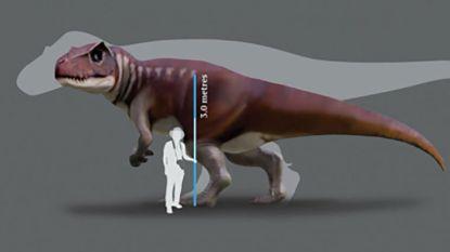 Reusachtige vleesetende dino's ouder dan de T. rex kwamen ook in Australië voor
