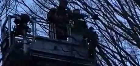 Kauw zit dagenlang vast in hoge boom en wordt gered door brandweer en Dierenambulance