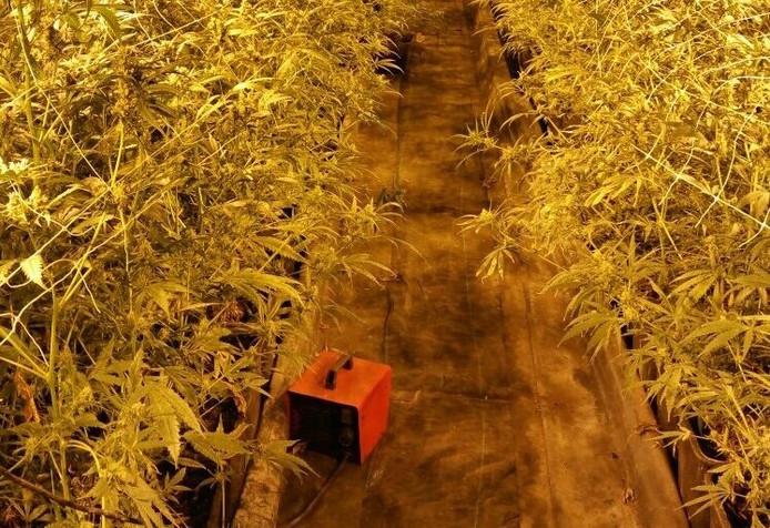 De kwekerij heeft minstens 4 keer eerder een oogst opgeleverd