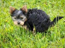 Actie tegen hondenpoep in Harderwijkse groenstroken