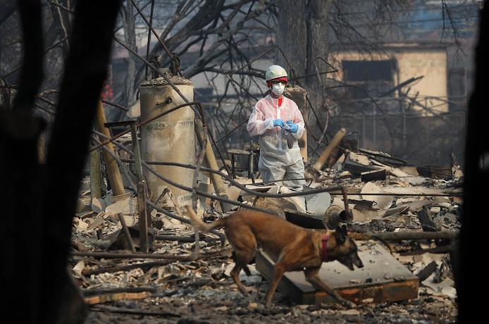 Een reddingswerker en haar speurhond zoeken in de verschroeide bossen van Paradise naar overlevenden van de bosbrand.
