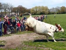 Melkkoeien vaker de wei in: in Brabant bij ruim de helft van de veehouderijen