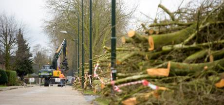 Raad eist opheldering over bomendebacle Budel