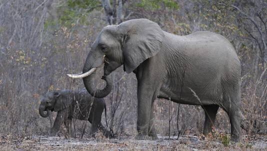 Olifanten in Hwange National Park
