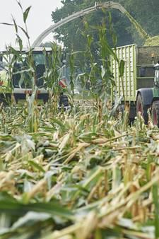Vroege herfststorm knakt grote maisnamen