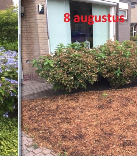 Tuin in paar weken van groen naar bruin. 'En nu maar hopen dat het ooit weer terug gaat naar groen'
