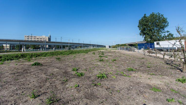 Op Sloterdijk is nog ruimte voor de bouw van nieuwe kantoren., De gemeente ziet er liever meer woningen verrijzen. Beeld Eva Plevier