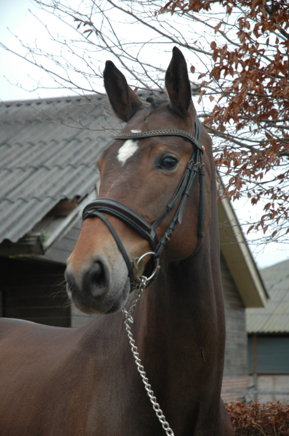 Het paard Dancing Brave is nog wel vermist.