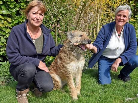 Graauwse schrijfster en kunstenares maken sieraden van botten, hond Oda helpt mee