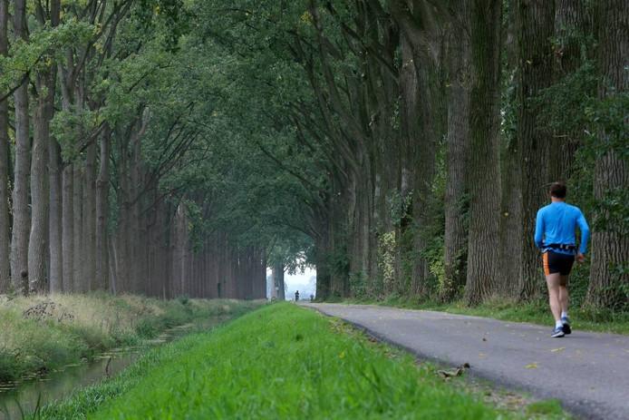De te kappen populieren langs het Nieuwe Kanaal bij Wageningen.