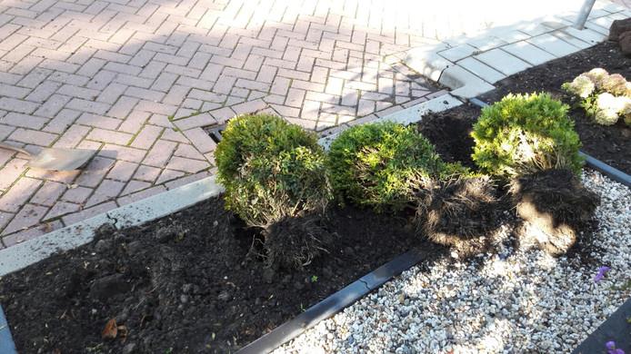 Uit een voortuin in de Lijsterlaan in Bleiswijk zijn planten getrokken.