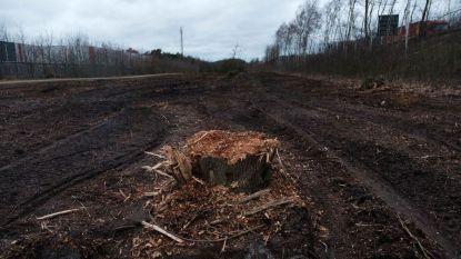 """BOS+ gaat in beroep tegen nieuwe ontbossingsplannen Essers: """"Blijkbaar kan hun uitbreidingshonger enkel gestild worden door het rooien van bossen"""""""