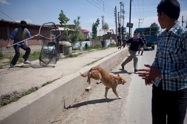 Archiefbeeld. In India leven naar schatting meer dan 30 miljoen straathonden. Jaarlijks sterven er zo'n 20.000 mensen aan hondsdolheid.