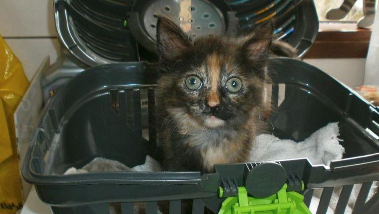 Eén van de gevonden katten Beeld De Poezenboot