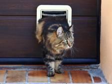 'Kat naar buiten doen is in strijd met EU-regels'