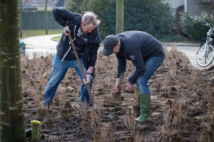 Werken aan een bijvriendelijke groenstrook in Heeten.
