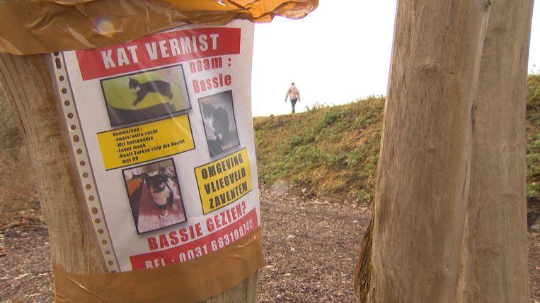 De kat ontsnapte bij aankomst vanuit Turkije uit haar kennel en is sindsdien vermist.