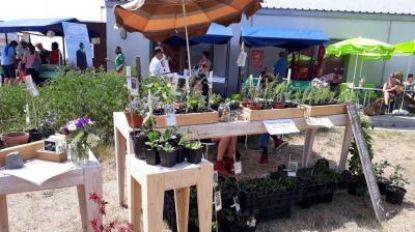 Jaarlijkse Bio Ecomarkt in Ter Walle
