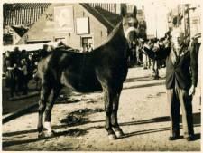 Voor het eerst sinds 1953 geen paardenmarkt in Ameide: 'Niemand mag op onze mart corona oplopen'