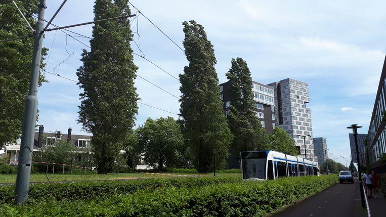 De bovenleiding knapte toen er een tram onder reed Beeld Hanneloes Pen