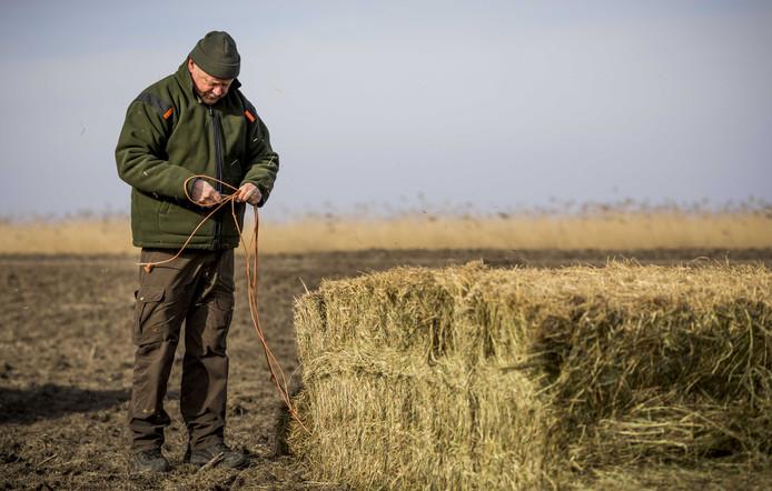 Staatsbosbeheer plaatst schraal hooi om dieren bij te voeren.