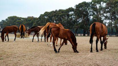 """Animal Rights: """"Belgisch farmabedrijf doodt gezonde honden en paarden voor dierproeven"""""""