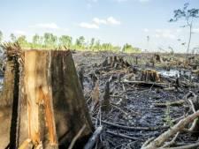Boze Amerikanen: Nederlandse subsidies voor biomassa maken onze natuur kapot