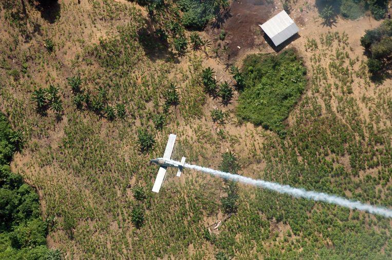 Een vliegtuigje sproeit pesticiden over een cocaveld om te oogst te verpesten in Colombia.