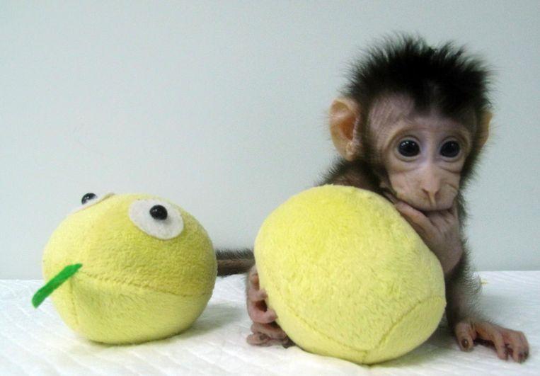 Hua Hua met een speeltje Beeld ap