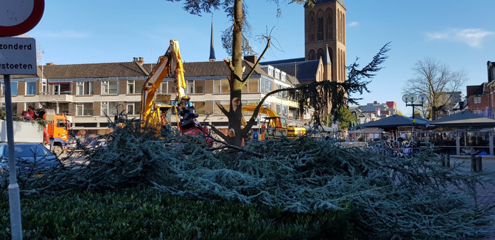 De ceder op het Burgemeester Jansenplein in Hengelo wordt gekapt na een spoeduitspraak van Raad van State.