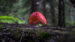 Herken jij de giftige paddenstoel? Speel de quiz!
