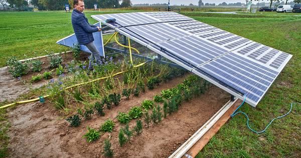 Groene stroom én plantenteelt; zonnepanelen als verrijdbare kweekbakken in Lith | Oss, Uden e.o. | gelderlander.nl