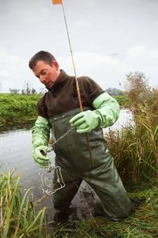 Waterschap heeft muskusrat in de tang