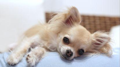 1 op de 5 hondenpups komt uit Oostblok: als pup in is, komt hij uit Oost-Europa
