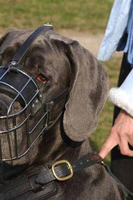 Hond die bejaarde in Huijbergen beet moet muilkorf op als hij buiten komt