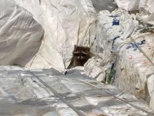 Wasbeergezin net op tijd ontdekt: vlak voordat moeder en kids in Zutphen door de shredder zouden gaan