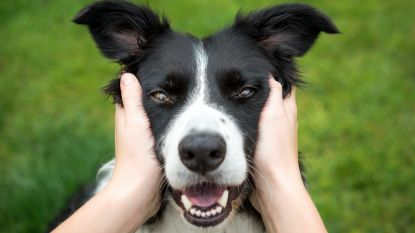 Let op wat je zegt: hond verstaat ons beter dan we denken