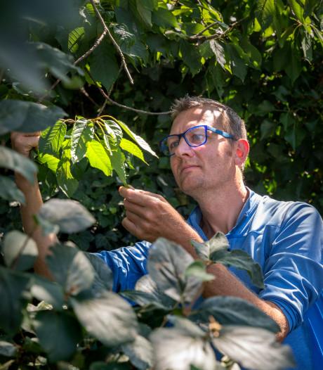 Allemaal beestjes: 'Genoeg insecten die jouw tuin gebruiken als een kroeg'