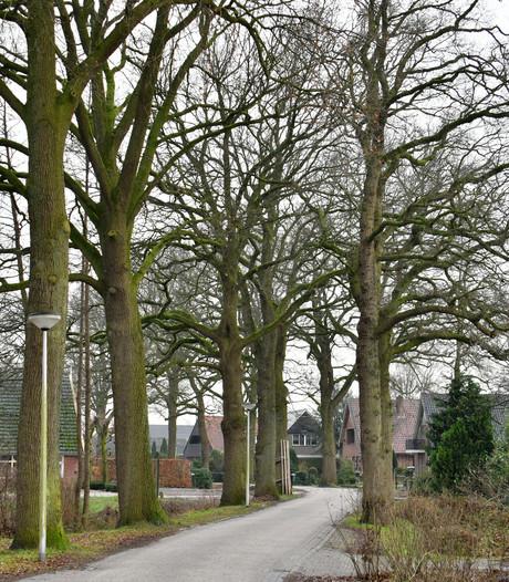 SP en PvdA willen met spoed raadsvergadering over bomenkap Goor