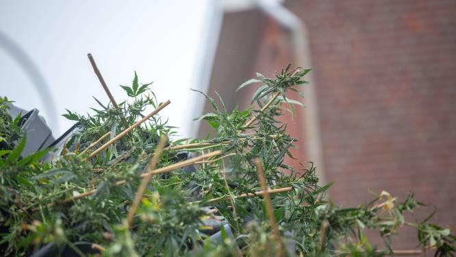 """Hongaar staat terecht voor cannabisplantage: """"Ik gebruikte kweektenten ook voor tomaten"""""""