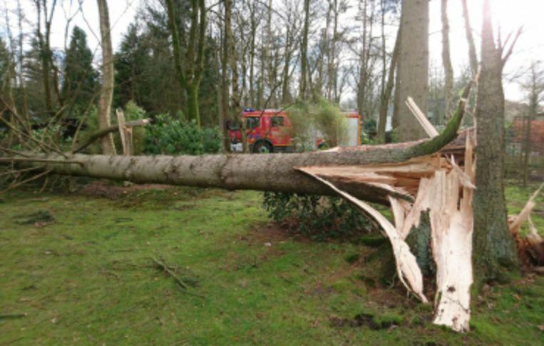 De storm Ciara hield ook in Schilde lelijk huis.