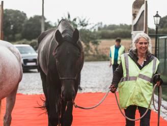 """Paard dat 100 kilometer stapte voor complexe ingreep is overleden: """"Ik heb Ease geopereerd alsof het mijn eigen kind was"""""""