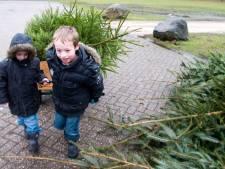 Hoeksche Waardse kinderen halen ruim 8000 kerstbomen op: 'Een soort afterparty'
