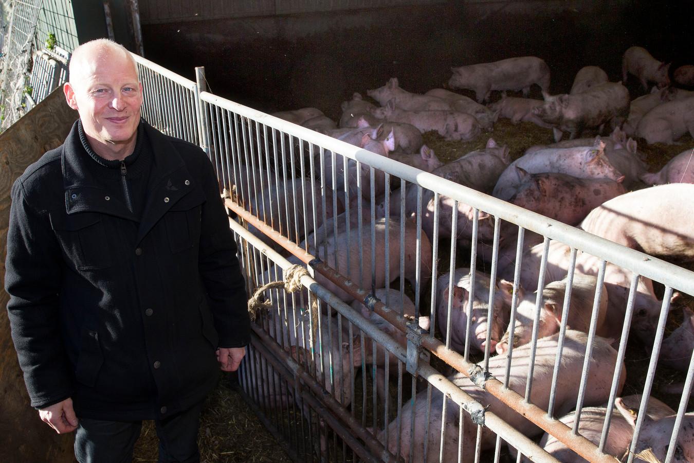 Een archieffoto van Chris Hoeven bij de varkens in de stal aan Langereijt 37 in Oostelbeers.