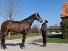 Topmodel Engel uit Eindhoven zet zaak rond dressuurpaard U2 door, paard zou gehandicapt zijn na training bij Stal Bartels in Hooge Mierde
